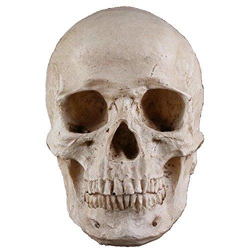 Partydekorationen Lebensgröße Kinder Menschlichen Schädel Kopf Ornament Modell Requisiten (Lebensgroße Halloween Requisiten)