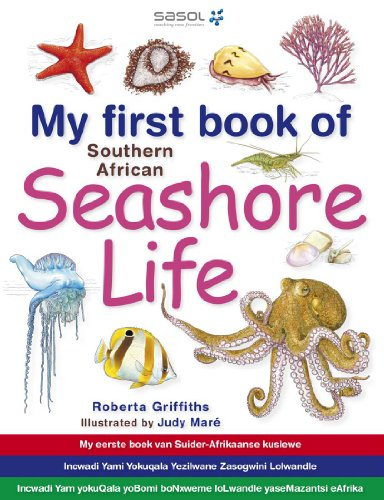 Sponge Rock (My First Book of Southern African Seashore Life (English Edition))