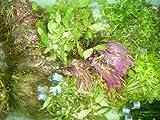 10 Bund ca. 60 Wasserpflanzen