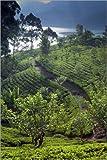 Poster 100 x 150 cm: Tee-Plantage und See, Sri Lanka von