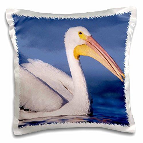 danita-delimont-birds-american-white-pelican-bird-rockport-texas-na02-rnu0351-rolf-nussbaumer-16x16-