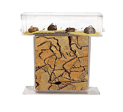 Fourmilière T en SABLE (Fourmis et Reine GRATUITES) - New educational Ant farm - Formicarium for LIVE ants