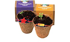 bioQ Plantable Rakhi with Seeds (Pack of 2 Boxes) | Eco Friendly Kit with Planting Set & Festive Essentials | Grow Plants from Rakhi | Sustainable Rakshabandhan