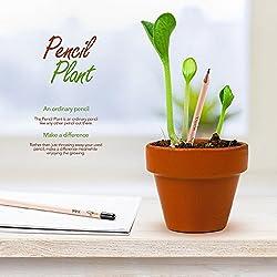 Lápiz de Brotes Hierba Lápiz Plantable con Semillas Para Niños DIY Regalo de Cumpleaños 8 Piezas / Caja (1 caja)