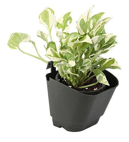 CAPPL Vertical Garden Wall Hanging Pot, 12 Pcs, Black Color