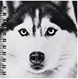 3dRose db_11326_3 Siberian Husky Mini No...