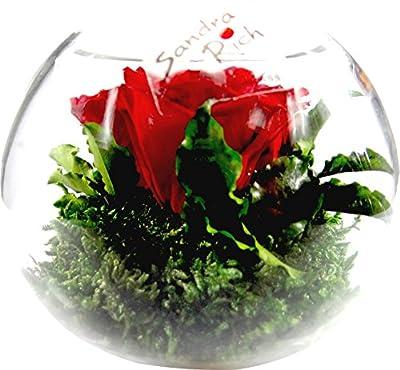Rosen-te-amo - Multi Blume GesteckT von Rosen-Te-Amo auf Du und dein Garten