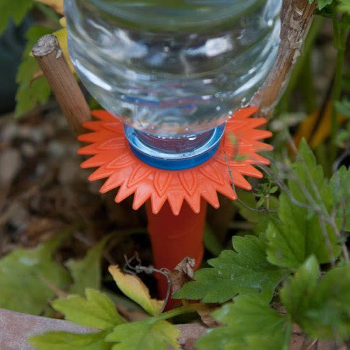 6 Watering Spikes - the best plant watering solution