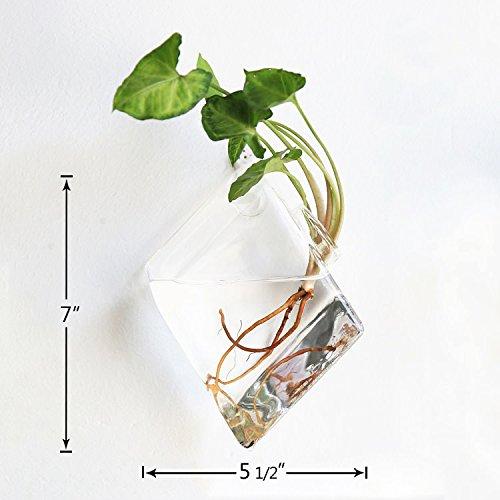 Mkono 2 aus Glas zum Aufhängen Wand Vase Flower Pflanztopf Behälter ...