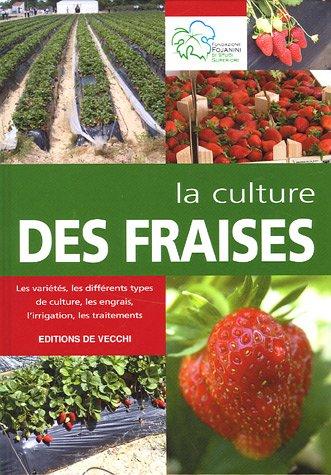 La culture des fraises