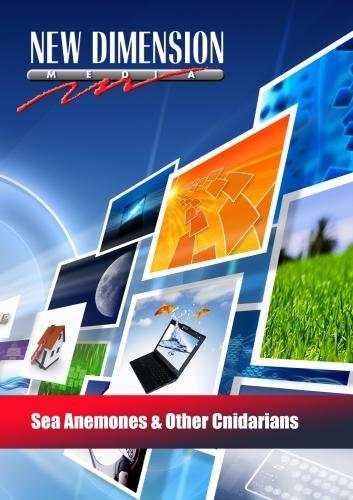 Bild von Sea Anemones & Other Cnidarians