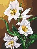 OBELLA Malen nach Zahlen erwachsene kinder mädchen DIY ölgemälde 50x40 cm Weiße Lilie Blume (Lilie, Mit Rahmen)