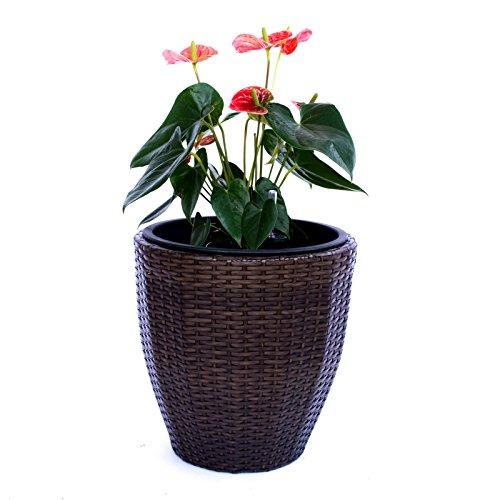 Pflanzkübel Blumenkübel Blumentopf rund konisch Polyrattan D30xH30cm mocca