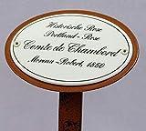 Rosenschild Emaille, Historische Rose, Comte de Chambord, 1860