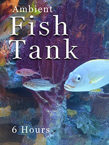 Ambient Fish Tank - 6 hours Cover