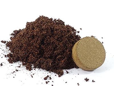 SAFLAX - Heilpflanzen - Sanddorn - 40 Samen - Mit Substrat - Hippophae rhamnoides von SAFLAX - Du und dein Garten