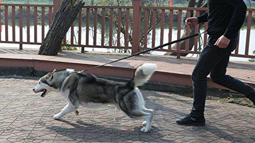 iMounTop Hundeleine Hundeleinen Joggen Leine Hund Elastisch Verstellbar 80-120cm (47.2 inch ) Dog Leash Freie Hand für Joggen, Walken, Training, Jagd und Radfahren Kleine und Große Hunde Nylon (Schwarz) -