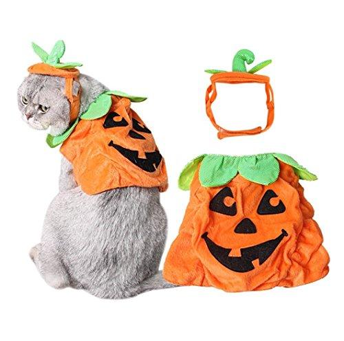 Lager Show Pet Halloween Hat und Reinigungstuch Anzüge, Verstellbar Plüsch Kürbis Poncho Party Kostüm mit Kopfbedeckungen Cosplay Zubehör für Katzen/Kitty/Kleine Hunde (Halloween-kostüme Ball Masquerade)