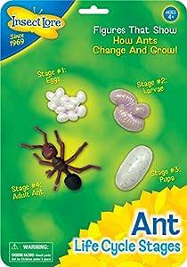 Insect Lore - Set con etapas del ciclo de vida de la hormiga  (06110)