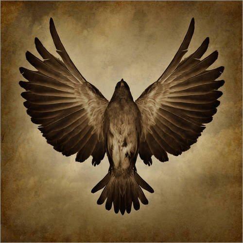 Posterlounge Alu Dibond 120 x 120 cm: gespreizte Flügel von Editors Choice