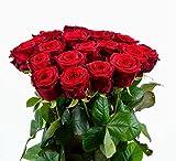 Blumenversand - duftende Rote Rosen