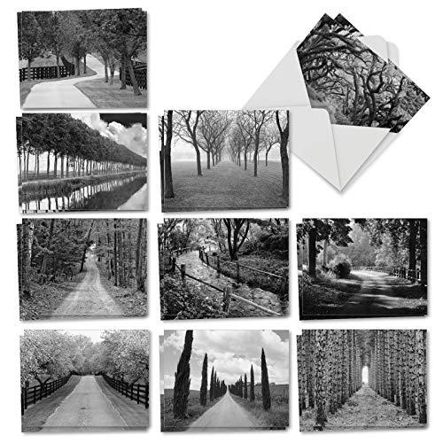 Karte Schwarz Und Weiß (Tree Lines: 20 sortierte Karten für alle Anlässe, 10 x 13 cm, mit schwarz-weißer Fotografie von Wegen durch Bäume, mit Umschlägen. AM3313OCB-B2x10)