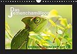 Das Jemenchamäleon (Wandkalender 2019 DIN A4 quer): Ein kleiner Drache stellt sich vor (Monatskalender, 14 Seiten ) (CALVENDO Tiere)