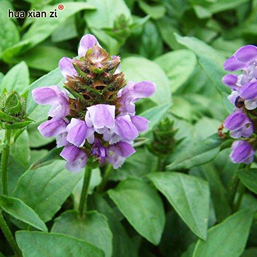 20 Seeds/Bag Big Flower Selfheal Seeds Prunella Grandiflora Flowers Seeds Plants For Home Garden