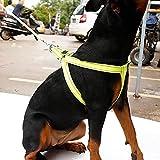 Pawaca Hundegeschirr mit Leine Brustgeschirr Hunde Geschirr Sicherheitsgeschirr für Haustiere Hunde Verstellbare Reflektierende Sicherheit Leine Haustier Nylon Leine Softgeschirr