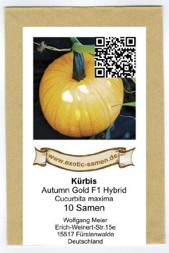 Kürbis - Speisekürbis - Halloween - Autumn Gold F1 Hybrid - 10 Samen