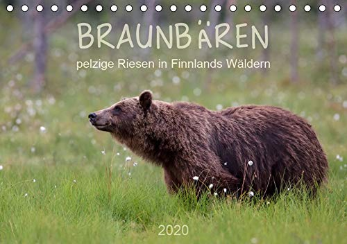 Braunbären - pelzige Riesen in Finnlands Wäldern (Tischkalender 2020 DIN A5 quer): Einblicke in das Lebens eines der grössten Säugetiere Europas (Monatskalender, 14 Seiten ) (CALVENDO Tiere)