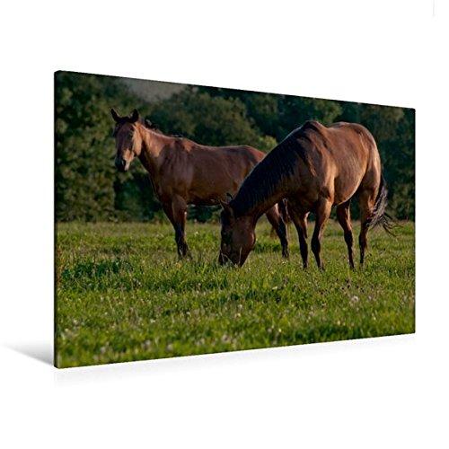 Calvendo Premium Textil-Leinwand 120 cm x 80 cm quer, EIN Motiv aus dem Kalender Pferdekalender | Wandbild, Bild auf Keilrahmen, Fertigbild auf echter Leinwand, Leinwanddruck Tiere Tiere