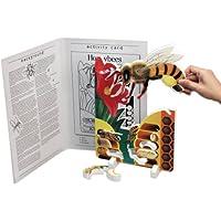Book Plus Bee Life Cycle Foam Model, 25,4 x 35,5 x 1,9 cm