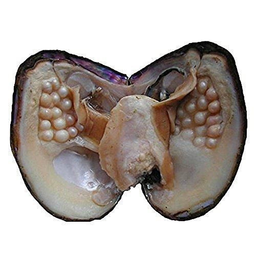 NeuFashion Ostrica con 28perle coltivate, regalo di nozze, perle d'acqua dolce, perle ovali, 5-7mm, per anniversario, regalo per donna