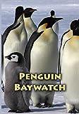 Penguin Bay by Luc Jacquet