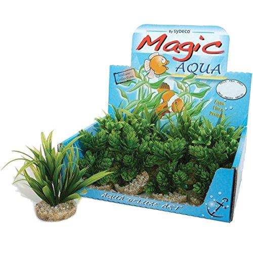 sydeco-naturel-plantes-magic-aqua-naturals-13-cm-lot-de-12