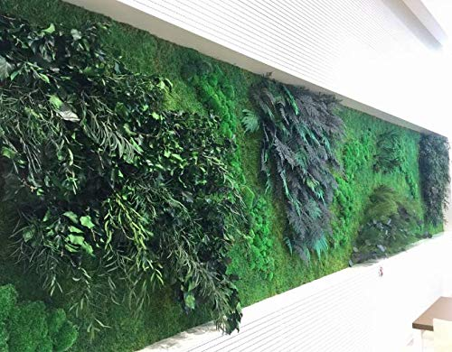 Mur végétal intérieur stabilis
