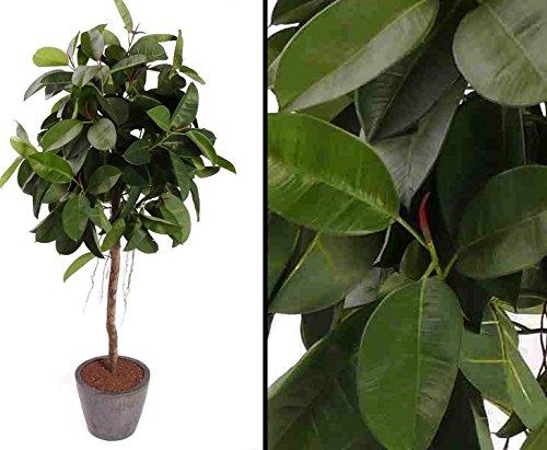 Ficus Gummibaum, Höhe ca. 150cm – Kunstbäume Kunstbaum künstliche Bäume Kunstpflanzen Kunstpalmen Dekopalmen