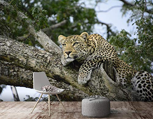 AJ WALLPAPER 3D Die Leoparden Im Kofferraum 738 Tier Tapeten Drucken Abziehbild Deko Innen Wandgemälde Selbstklebend Tapete DE Sunday (Vinyl(KeinKleber&abnehmbar), 【123