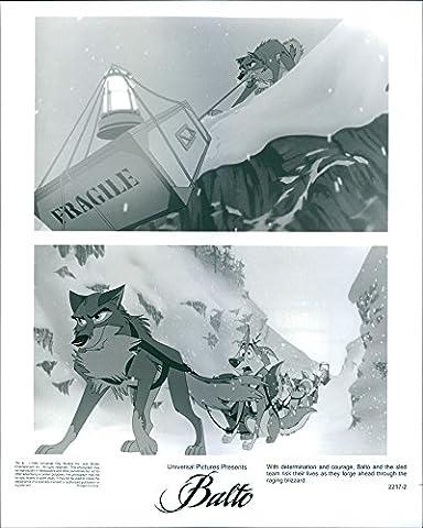 Photo de Vintage avec détermination et courage, Balto et la luge équipe Risque leur vie comme ils Forge Ahead à travers le Raging Blizzard.