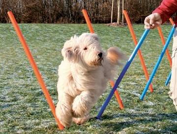 Slalom d'agilité Trixie pour chien 115 x 3 cm