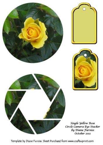 single-yellow-rose-circle-camera-eye-stacker-by-diane-furniss
