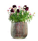 Sendez Blumentopf aus Kupfer Pflanztopf Schale Dekotopf Vase Blumenvase