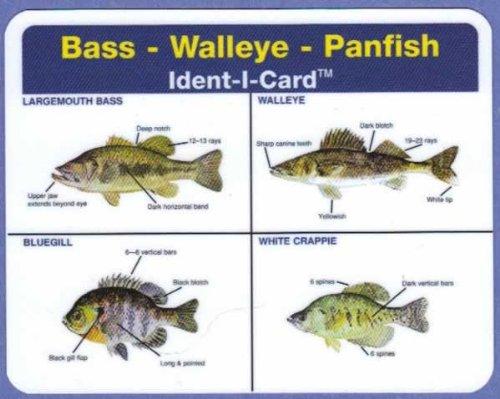 69d2ea26b53d3 Bass - Walleye - Panfish Ident-I-Card - Freshwater Fish Identification Card