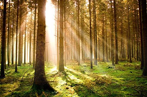 Birke-brücke (VLIES Fototapete-HERBST KIEFER-WALD-400x260 cm-8 Bahnen-(21459)-Inkl. Kleister-EASYINSTALL PREMIUM-Landschaft Bäume Gras Panorama Sonne Wiese See Gebirge Berg Steine Fluss Insel Brücke Meer Sunset)