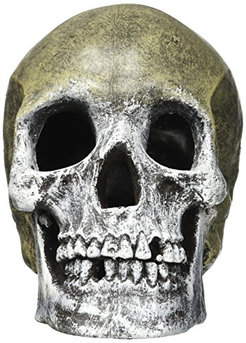 resin-ornament-life-like-human-skull