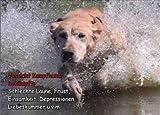 INDIGOS UG - Türschild FunSchild - SE571 DIN A4 ACHTUNG Hund Labrador Retriever - für Käfig, Zwinger, Haustier, Tür, Tier, Aquarium - aus hochwertigem Alu-Dibond beschriftet sehr stabil