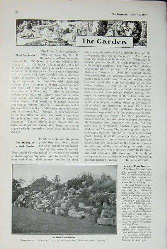 Yucca 1907 Gloriosa Cornwall Pflanzt Steingarten-Blume