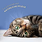 AniForte Ohrmilbenöl 20 ml bei Ohrmilben- Naturprodukt für Hunde, Katzen und andere Haustiere - 4