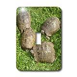 3drose LLC l.s.p. _ 46677_ 1Testudo Iberia, Tiere, Ibera Griechische Schildkröte, Land Schildkröten, Reptilien, Testudo Ibera, Schildkröte, Single Toggle Switch